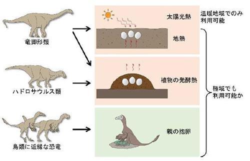 図3 今回の研究で推定された、恐竜が卵を温める方法。