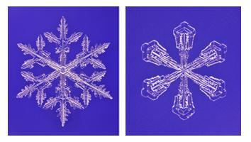 図1.雪結晶の顕微鏡写真。左は樹枝状結晶。結晶の径は3.1mm、右は広幅六花状結晶。結晶の径は1.3mm 出典:雪氷学会HP、著作者:油川英明氏