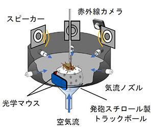 図2 コオロギの行動を測定する実験装置。背中を固定されたコオロギが動くと、空気で浮かせた発泡スチロール製のボールが回転する。その回転を光学マウスで検出し、コオロギの動きを記録する。コオロギは夜行性なので、暗くして赤外線で動きを見る。