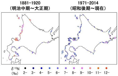図2 コンブに含まれていた窒素15の割合。赤いほど割合が高く、青は低い。左図の日本海沿岸だけ、窒素15が多かった(栗林さんら研究グループ提供)