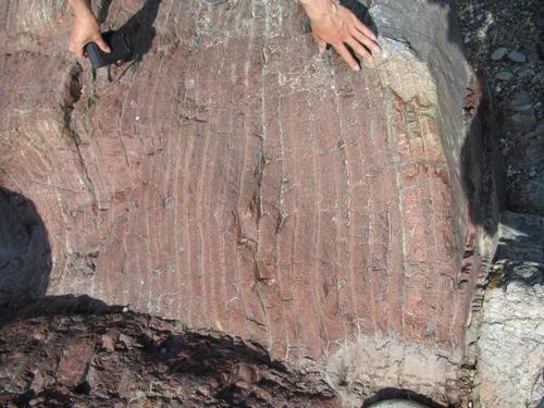 写真 分析に使った岐阜県各務原市のチャート。厚さ数センチの層が重なっている。1層が堆積するのに2万年かかる(池田さん提供)