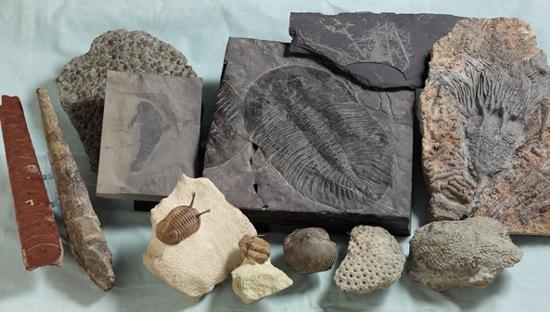 オルドビス紀などの動物化石群(東北大学海保邦夫教授ら研究グループ提供)