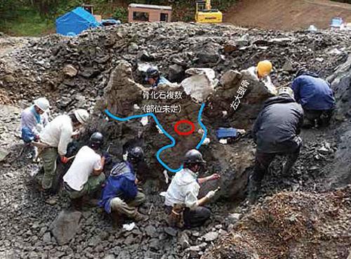 写真2 むかわ町の発掘現場。赤い丸が上顎骨が見つかった場所(提供・北海道大学/むかわ町穂別博物館)