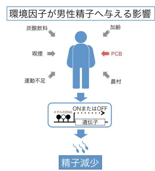 図 環境因子が精子に与える影響(東北大学研究グループ作成・提供)