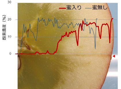 図 4. 果実内部の酸素濃度分布。赤い矢印はセンサー貫入ライン