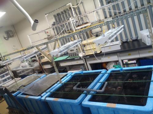 写真 3. 研究室内の水槽実験システム。二酸化炭素の濃度、水温、光を制御しながら生物を飼育する。常に新鮮な海水を供給するよう独自に開発した「流水槽」というシステム。