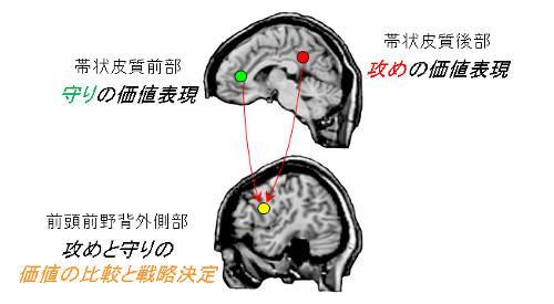 攻めと守りの戦略決定に関わる脳のネットワーク。与えられた盤面での攻めの主観的価値が帯状皮質後部に、守りの主観的価値が帯状皮質前部にそれぞれ表現され、前頭前野背外側部に伝えられ、その差によって攻めるか守るかの戦略が決定される。