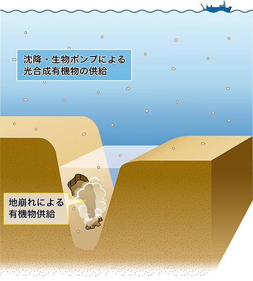 今回の研究でわかった超深海・海溝生命圏の概念図