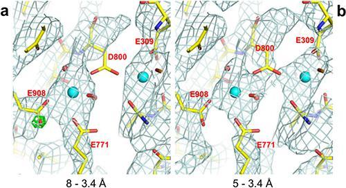 図2. Ca2+-ATPaseのCa2+結合部位の静電ポテンシャルマップ。a:8Å〜3.4Å分解能の電子線回折から得られた静電ポテンシャルマップ。800番目のアスパラギン酸(D800)側鎖に相当する密度を表す部分(図中の網目状の部分)が欠損している。また、908の番目のグルタミン酸(E908)側鎖にプロトン化を示す密度(緑)が現れている。