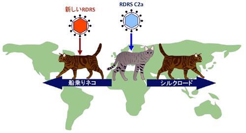 ネコの移動とRDRSの獲得
