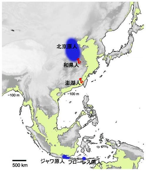 アジアの原人地図。緑色の部分は、海深100mより浅い海域で、 氷期の海面低下時に陸になったと考えられる。