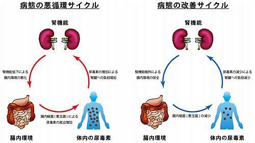 慢性腎臓病の病態の変化