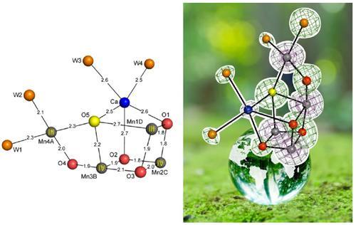 光化学系Ⅱに含まれている水分解触媒の構造。左は、SACLAのX線自由電子レーザーで解析された構造。各原子間の距離をオングストロームで表している。右は、左側の触媒の構造を回転し、地球儀の上に載せて表した。
