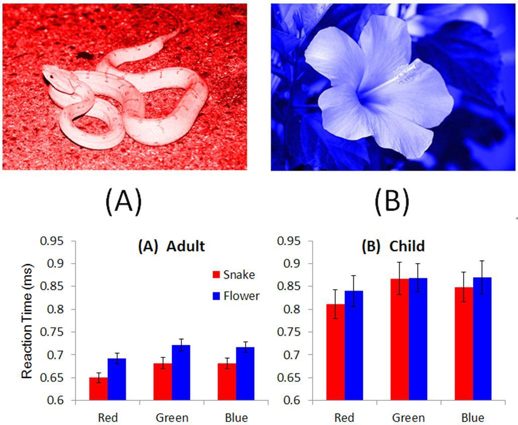 上は実験に使った刺激の例、左が赤いヘビ、右が青い花。下は、ヘビと花の写真への赤、緑、青の色ごとの反応時間の比較。左が成人、右が子ども。いずれもヘビの写真の時のほうが、花よりも色の回答に要した時間が短かった