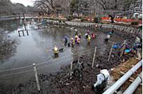 井の頭池の「かいぼり」の作業風景