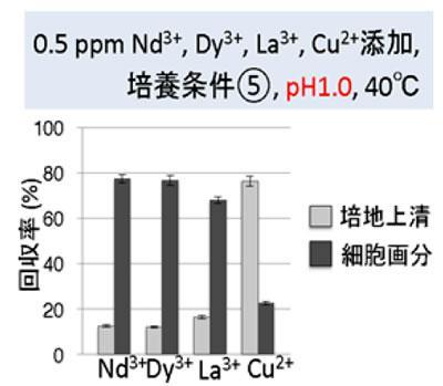 準嫌気従属栄養条件(図の5)でpH1.0にすると、レアアースのみを紅藻の細胞に高い収率で回収できる