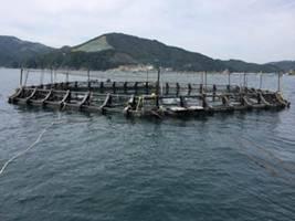 今回開発したギンザケ用浮沈式生簀。左は浮上時。宮城県女川湾で。