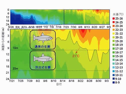 試験海域の水温の鉛直分布(2014年5月25日〜9月3日)。生簀を沈下させると、8月まで生簀内の水温をギンザケの生育限界温度(21℃)以下に保つことができる。