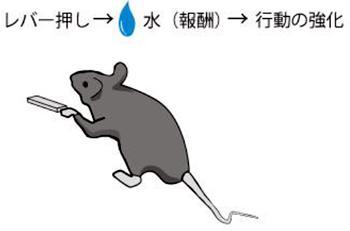 動物の報酬学習と関連する神経回路