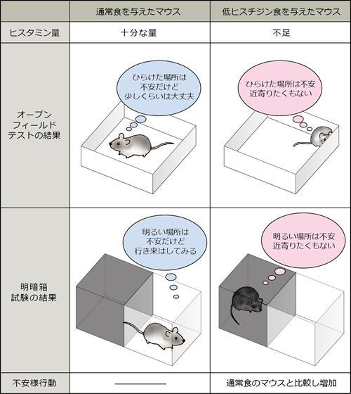 低ヒスチジン食によるマウスの不安様行動の変化