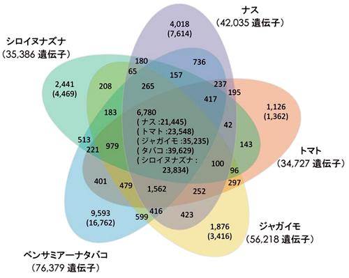 ナス遺伝子の他種(トマト、ジャガイモ、タバコ、シロイズナズナ)との比較。数字は類似の遺伝子をまとめたグループ数、()内はそのグループに属する遺伝子の数。5種類の植物すべてに共通する遺伝子のグループは6780。ナスだけに見られる遺伝子は4018グループの7614個だった。