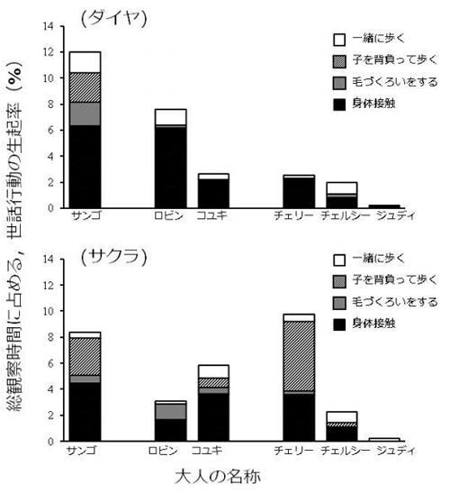 高知県立のいち動物公園のチンパンジー集団の観察結果。特に女の子のサクラ(下のグラフ)に関しては、チェリーというおとなの女性が盛んに世話をしていることがわかる。上のグラフは、男の子のダイヤに対する各おとなの世話行動。