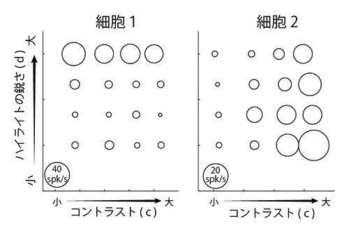 視覚野の神経細胞ごとに特性があり、左はハイライトの鋭さに反応した神経細胞、右はコントラストに反応した細胞