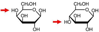 ガラクトース(左)とグルコース(右)の化学構造のわずかな違い