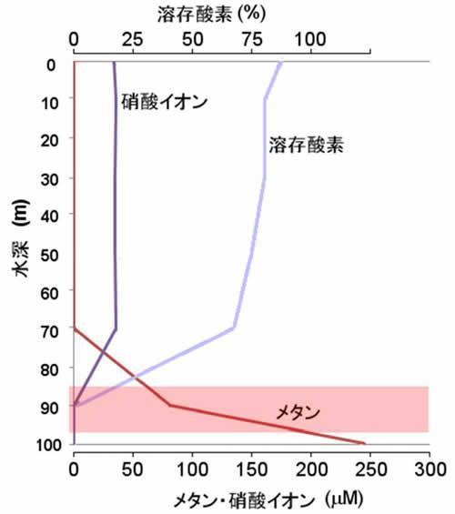 翡翠水庫の湖水環境と脱窒メタン酸化細菌の生息環境の概要。溶存酸素が枯渇し、メタンが供給される水深 90m 付近(図中着色部)で脱窒メタン酸化細菌が優占していた。