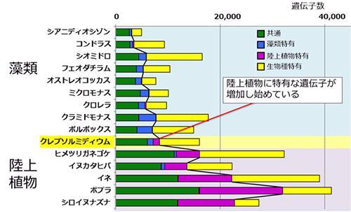 15植物種の遺伝子を、藻類特有な遺伝子、陸上植物特有な遺伝子、共通している遺伝子、その生物種にしかない遺伝子に分類しグラフ化した