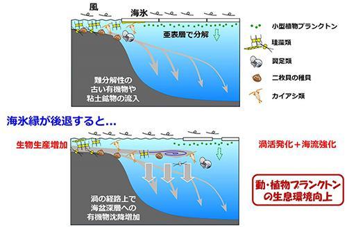 """海氷減少に対する海洋生態系の応答を示した模式図"""""""""""