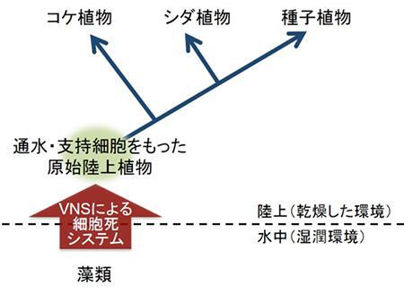 植物陸上化のイメージ図
