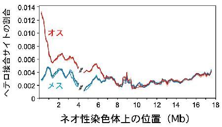 日本海イトヨのネオ性染色体で、オスとメスが塩基配列レベルで分化しつつあることを示す解析結果