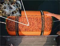 浮き桟橋に設置されたフロートの裏面に着底、増殖したポリプ