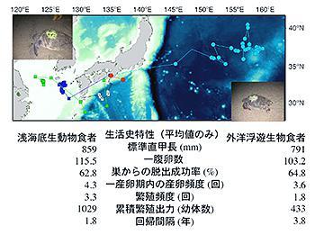 〈上の図〉人工衛星で追跡されたアカウミガメの産卵期以後の回遊経路 〈下の表〉浅海でえさを取るウミガメ・外洋でえさを取るウミガメの生活史特性の比較