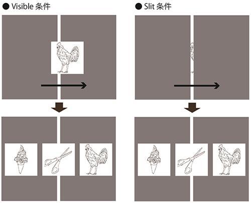 実験の様式。左図は、線画の全体が見える条件。右図は、隙間の向こう側で線画を動かす条件