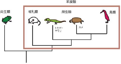 脊椎動物の系統関係