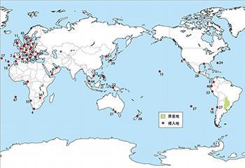 世界におけるアルゼンチンアリの侵入地域と在来の分布地域
