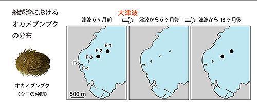 船越湾におけるオカメブンブクの分布の変化