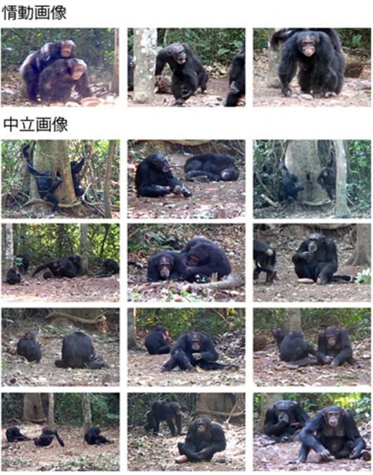研究に用いた3枚の情動画像(上段)と12枚の日常的な中立画像