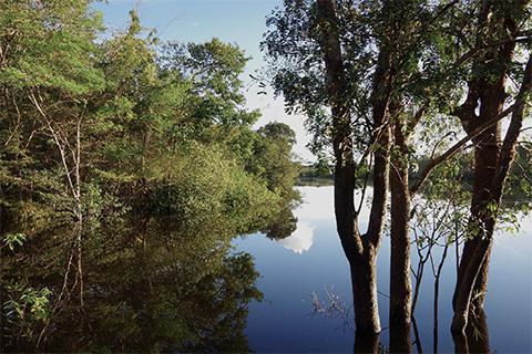 アマゾンの森と水辺の様子(池田さん提供)