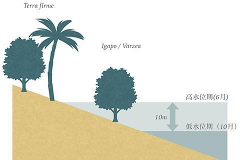 雨季と乾季の水位変化の模式図。雨季に浸水する森は「イガポ」と呼ばれる(池田さん提供)