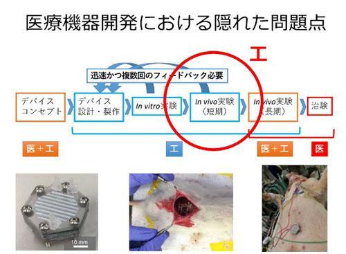 画像7 医療機器の開発工程。In vivo実験(短期の動物実験)を工学部で担当している