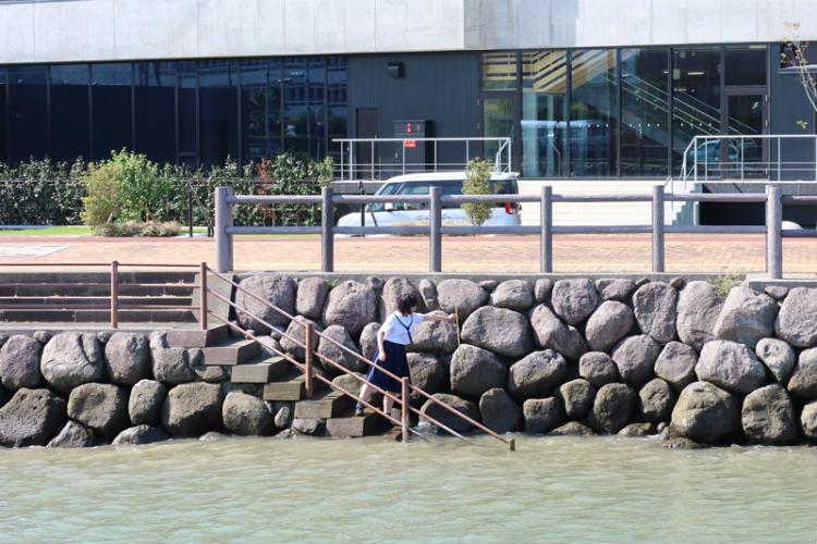 市役所付近の堤防で現地調査 ※画像提供:天草高校
