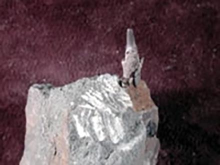 小学生が日本最古のネズミザメの歯化石発見