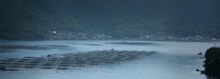 愛媛大学南予水産研究センターのある愛媛県愛南町。日本でも有数の養殖が盛んな海。