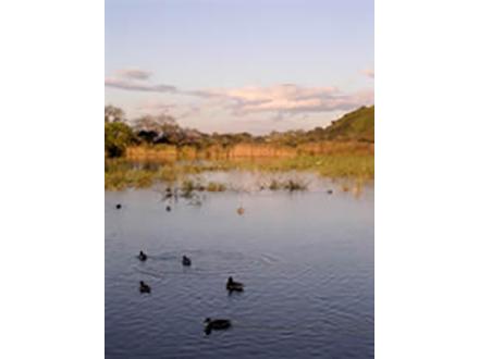 守られたガンの楽園 伊豆沼の温泉掘削計画白紙に