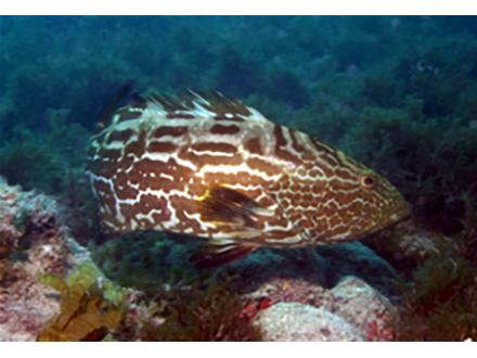 海の酸性化に、サンゴはやはり耐え切れないかもしれない
