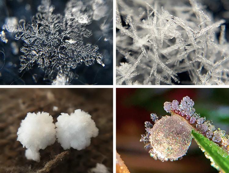 荒木さんが撮影した雪や霜の結晶の写真。(左上)-20度~-10度の湿った空気の中で成長する板状の結晶(樹枝六花)。(右上)-5度前後で成長する針状結晶。(左下)塊霰(かたまりあられ)。あられは雪の結晶の周囲に過冷却の雲粒(水滴)がつくことで成長する。(右下)霜結晶。雪結晶の写真をきれいに撮影するのは技術的にけっこう難しい。そこで、いざ雪が降ったときのために、霜結晶を撮影して練習する「#霜活」という取り組みも行われている。 ※写真提供:荒木健太郎