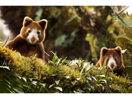 パプアニューギニアの熱帯林自然保護区に